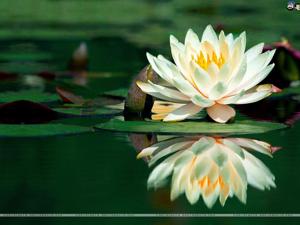 Lotus dating
